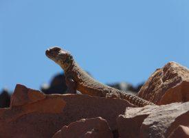 Desierto-tomando-el-sol-marruecos