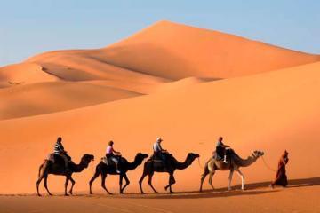 Paseo En Camello Merzouga Marrakech