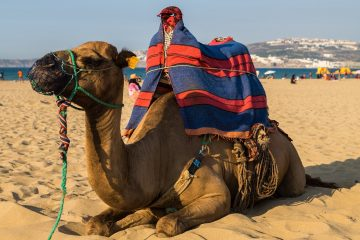If You Want To Travel To Morocco In August, You Will Discover Exotic Places Where You Can Enjoy A Pleasant Climate