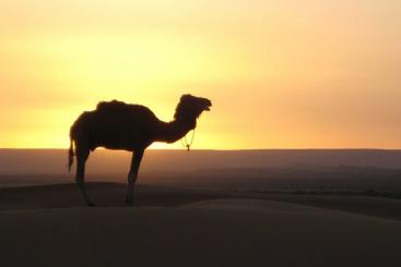 Viajes Tours Marruecos