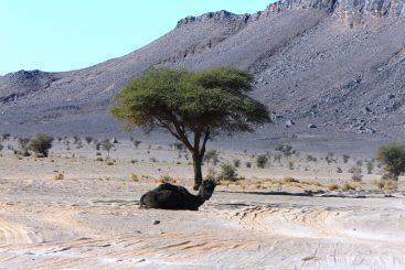 Las Rutas Al Desierto De Marruecos