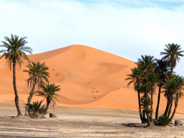 Desierto-dunas-y-palmeras-marruecos