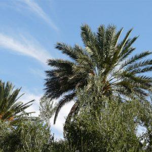 Semana Santa En El Desierto