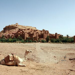 Ouarzazate Offers