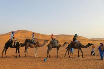 Excursiones En Camello Por El Desierto