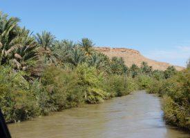 Oasis-palmeral-rio-ziz-marruecos