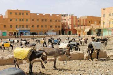 Rissani, Puerta Del Desierto De Marruecos